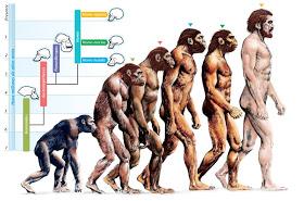 evolution of humans - El Ser Humano : Fruto de la Manipulación evolutiva.