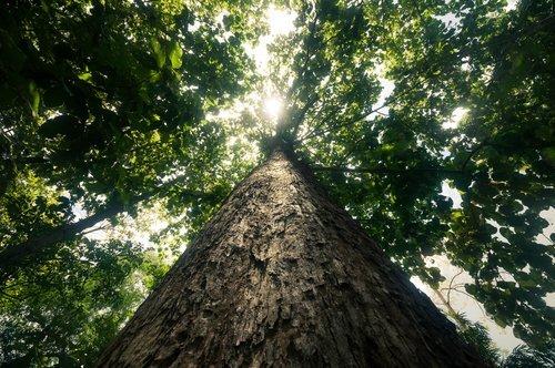 Los árboles se comunican y ayudan entre si