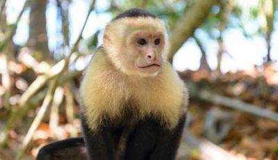 Un grupo de monos logra evolucionar y entra en la Edad de Piedra