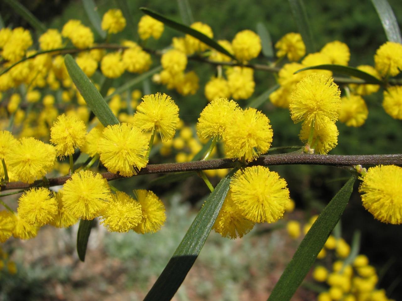 50 Plantas que atraen energías positivas según la antigua sabiduria ancestral