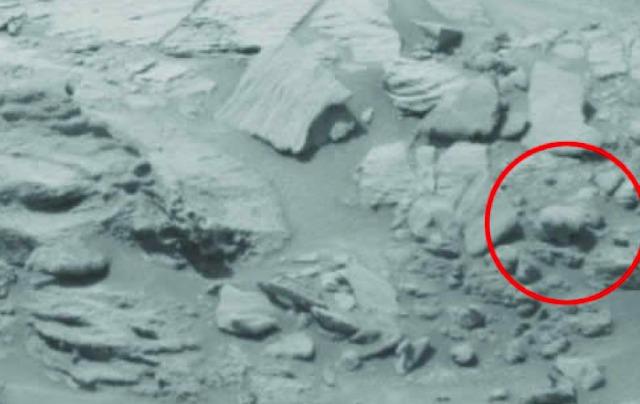 Alertan a NASA y a las Naciones Unidas por imagen de oso bebé en Marte