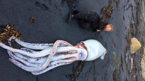 Aparece un kraken en una playa de nueva zelanda