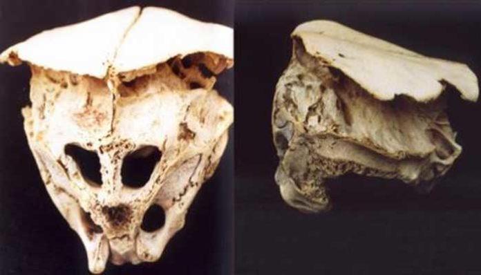 Dos cráneos alienígenas encontrados? ¿Los extraterrestres nos visitaron?