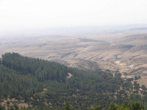El Bosque de Yatir, o de cómo Israel modificó el clima del país para poder sembrar