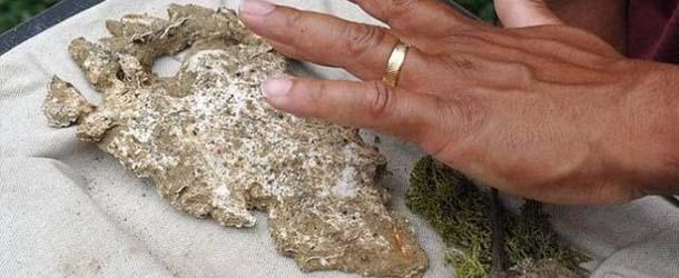 Descubren la huella de una misteriosa criatura en los bosques Misisipi