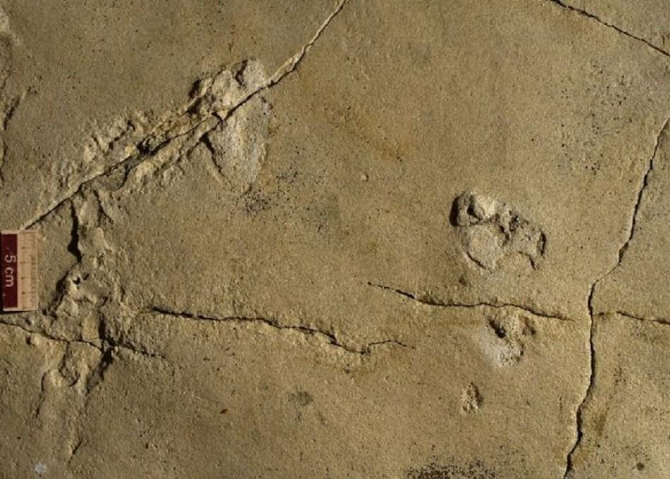 Las huellas de un millón de años que desafían a la evolución