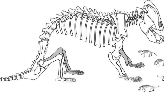 El importante hallazgo que muestra la evolución de reptiles en mamíferos