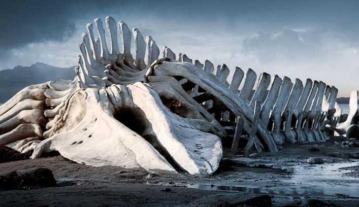 El leviatán el monstruo marino