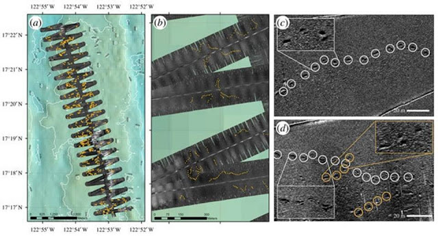 Huellas de una enorme criatura desconocida descubierta en el fondo del Océano Pacífico