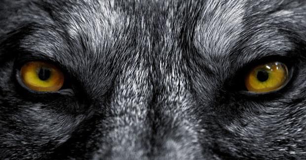 Las siete razas de hombres lobo, y cómo convertirse a cada una de ellas