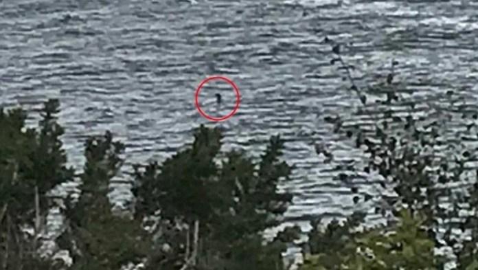 Una niña capturó la mejor imagen del Monstruo del Lago Ness en años