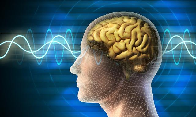 Descubren que el cerebro se mantiene consciente después de la muerte