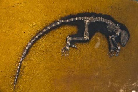 El lago Messel: el misterio mortal del Eoceno