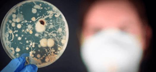 La bacteria que alarga la vida hasta los 120 años