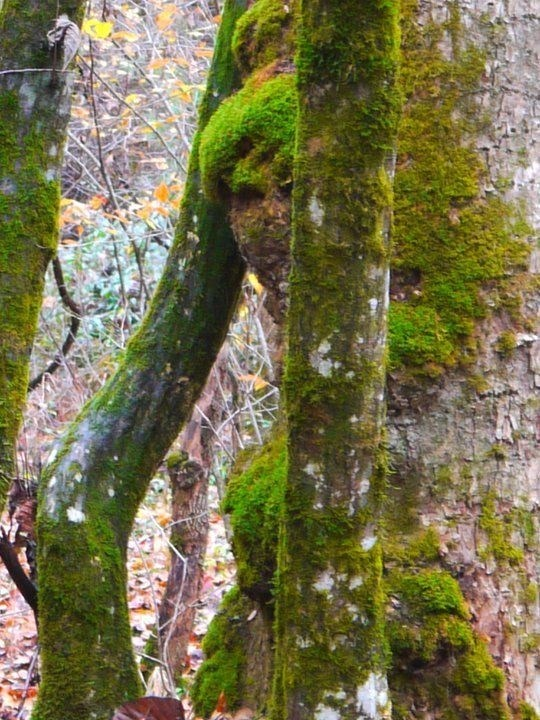 Los misteriosos arboles con forma de mujer que asombran al mundo ¿La verdadera forma de nuestra madre naturaleza?