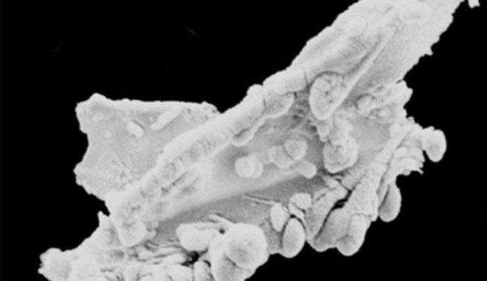 Misteriosos organismos extraterrestres hallados en la tierra