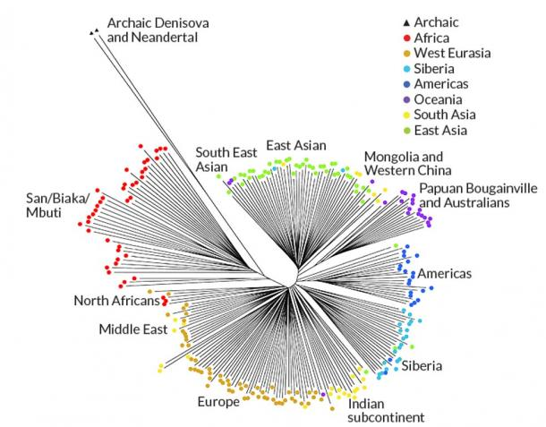 Nuestros Antiguos Ancestros Tenían Más ADN que Nosotros: ¿Hemos Involucionado?