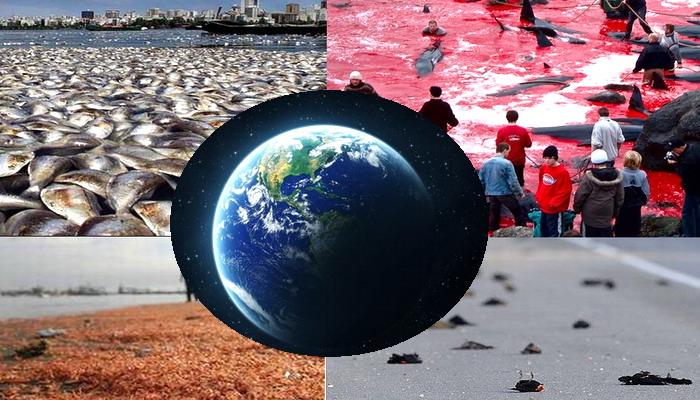Que es lo que en realidad esta ocurriendo en el planeta Tierra?