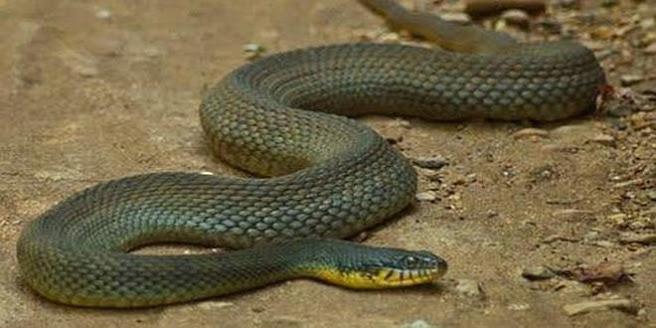 ¡Increíble! Serpiente es madre en cautividad ¡¡sin ningún macho!!