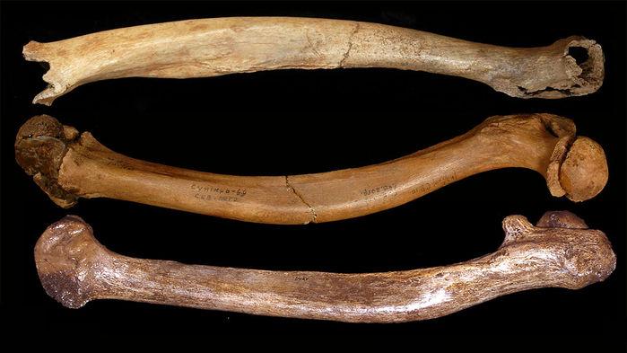 ¿Por qué hay tantas deformidades en los fósiles humanos del Pleistoceno?