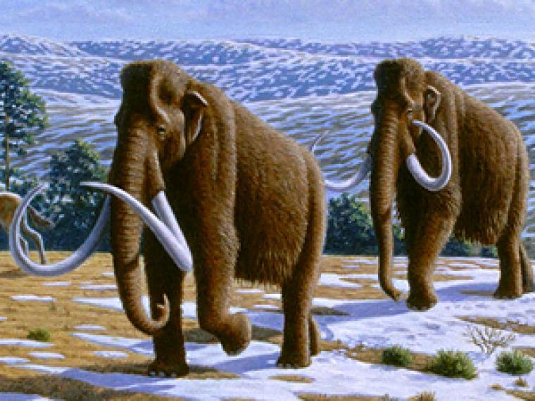 Alcanzada la fase inicial en el proyecto de #clonación de un animal extinguido: el #mamut lanudo siberiano