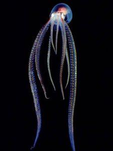 ¿Pulpos espaciales? – Encuentros con misteriosos seres… y sus tentáculos