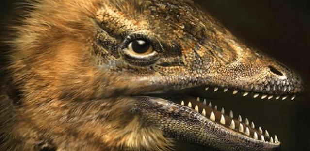 Aqué están jugando humanos! ¿Científicos crearon embriones de pollo con rostros de dinosaurios?