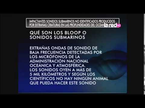 Impactantes sonidos submarinos no identificados producidos por extrañas criaturas en las profundidades del océano