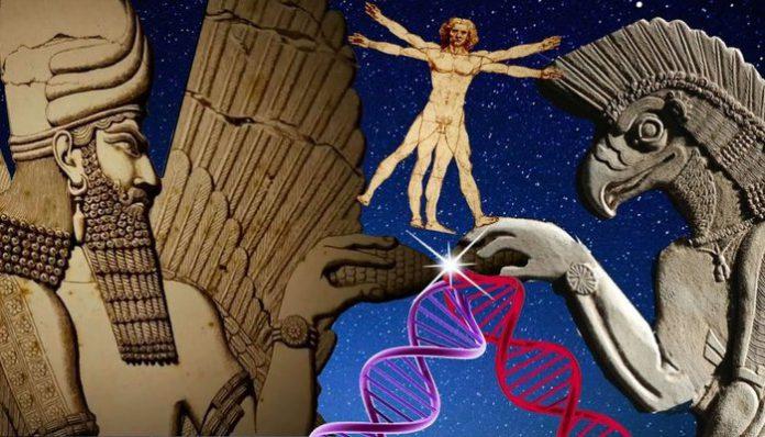Dos civilizaciones extraterrestre que sirvieron de ayuda en la evolución humana
