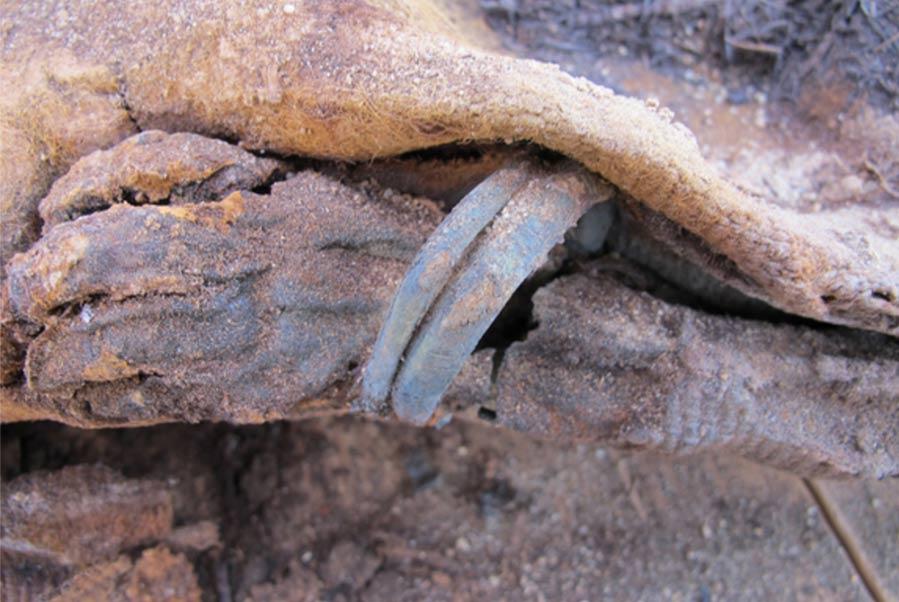 Descubrimientos intrigantes de la necrópolis de millones de momias en Egipto reveladas