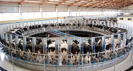 El por qué la leche pasteurizada está destruyendo tu salud