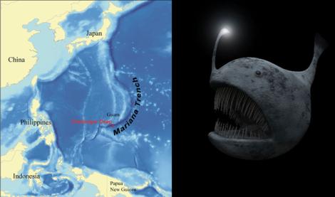 Encuentran un extraño pez viviendo en el lugar más profundo de la Tierra