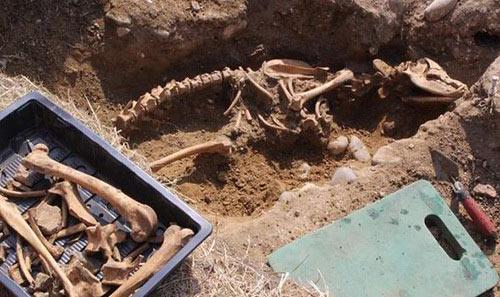 Esqueleto de perro infernal de más de 2 metros de altura encontrado enterrado cerca de un antiguo monasterio