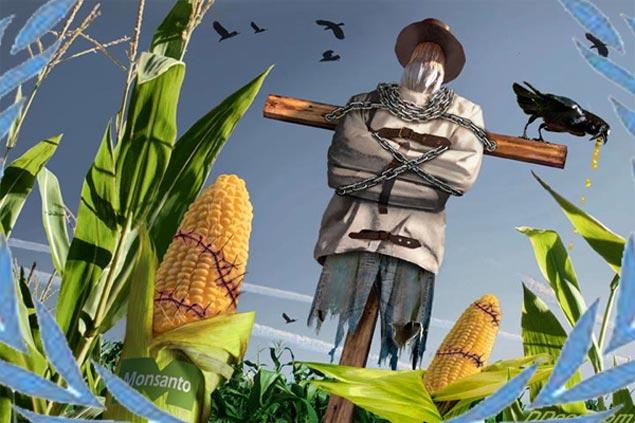 España, paraíso de multinacionales para el cultivo de alimentos transgénicos