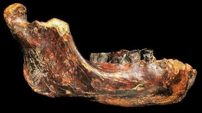 Identifican posible especie humana extinta