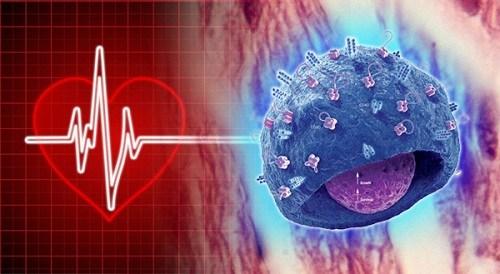La memoria celular en trasplantes de órganos