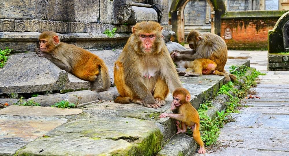 Sangre del Mono: La Raza de Esclavos de los Dioses