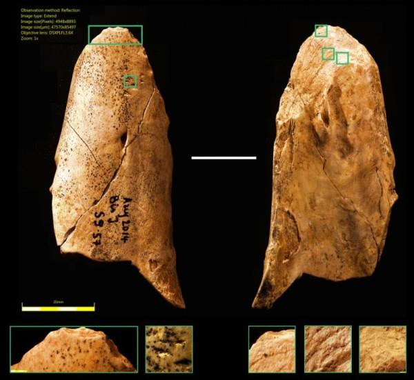 Una nueva herramienta neandertal lo acerca al Homo sapiens