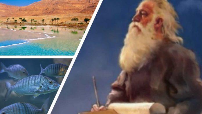 Vuelve la vida en el Mar Muerto: ¿profecía bíblica o desastre ecológico?