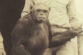 Hibridación humanos con animales