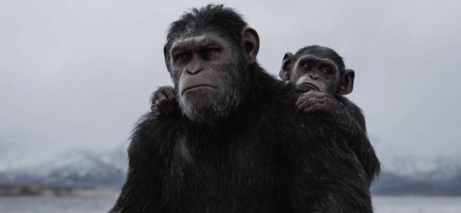 Según el estudio, existen criaturas en la tierra más inteligentes que los humanos