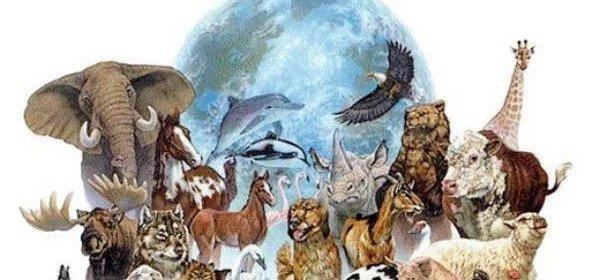 Los Animales De Poder O Totems