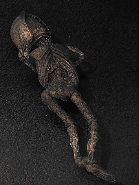 Aleshenka: El Extraterrestre Momificado Encontrado en Rusia