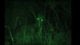El rastrillo, una pesadilla aterradora nacida de nuestros miedos ancestrales.