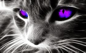 Gatos protectores del campo energético