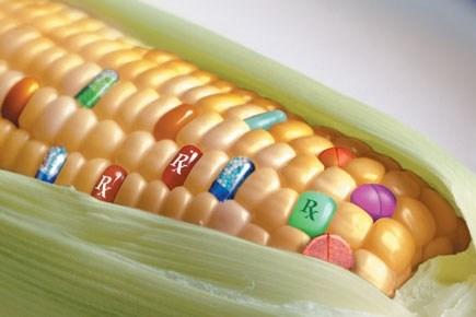 Monsanto: Terrorismo de BajaIntensidad