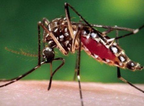 ¿Es el Chikungunya parte de una conspiración?
