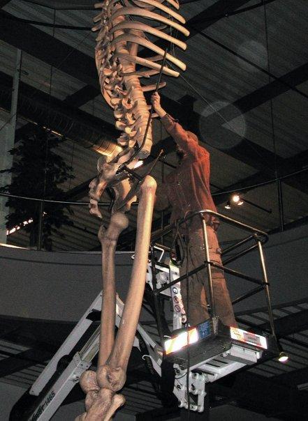 El Gigante Olvidado de 7 metros de Ecuador Aun se Exhibe en el Mystery Park, Suiza