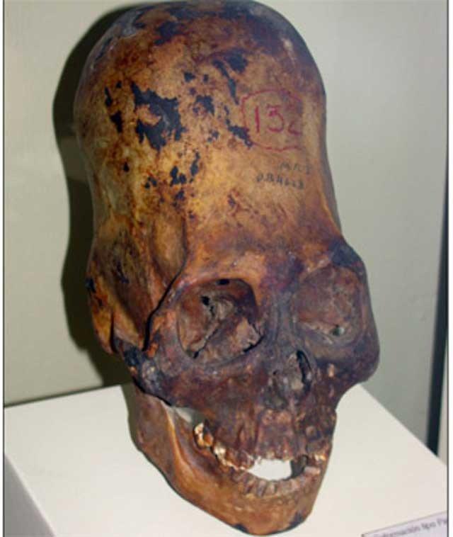 Homo Capensis , los otros humanos extraterrestres.