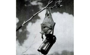 Murciélagos de Guerra: la propuesta del Proyecto X-Ray